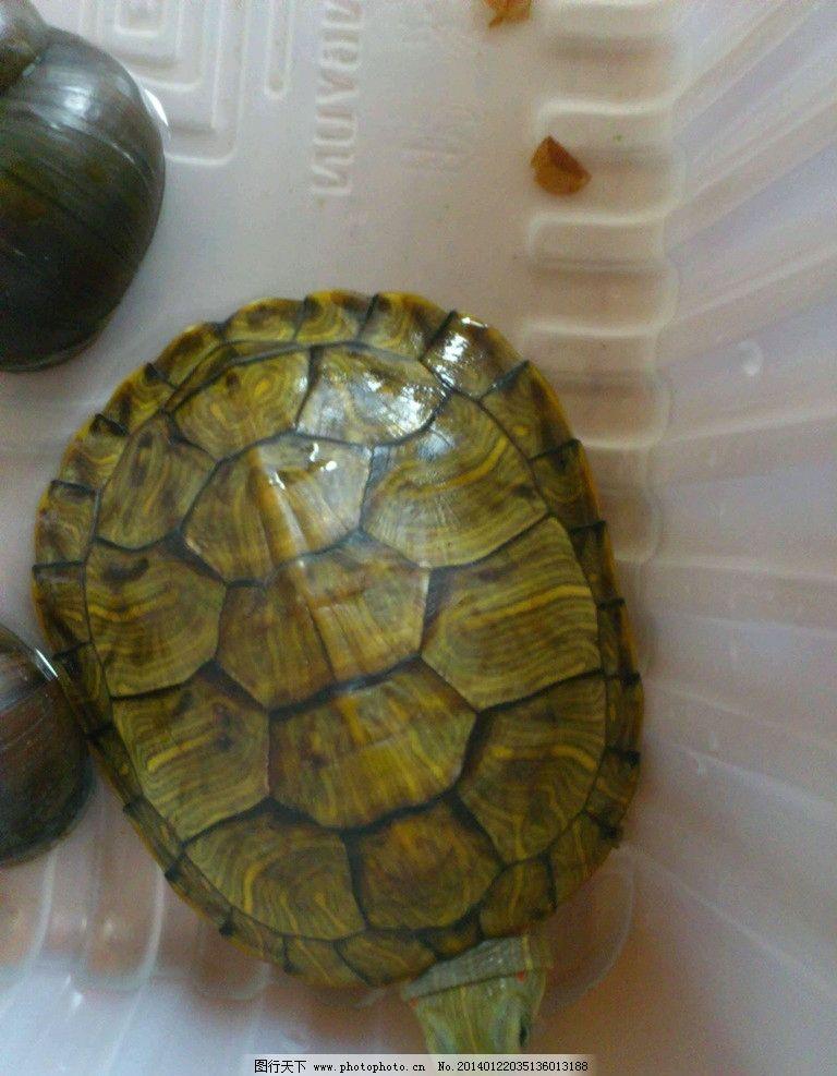 乌龟 龟 爬行动物 野生动物 动物世界 野生乌龟 海洋生物 生物世界
