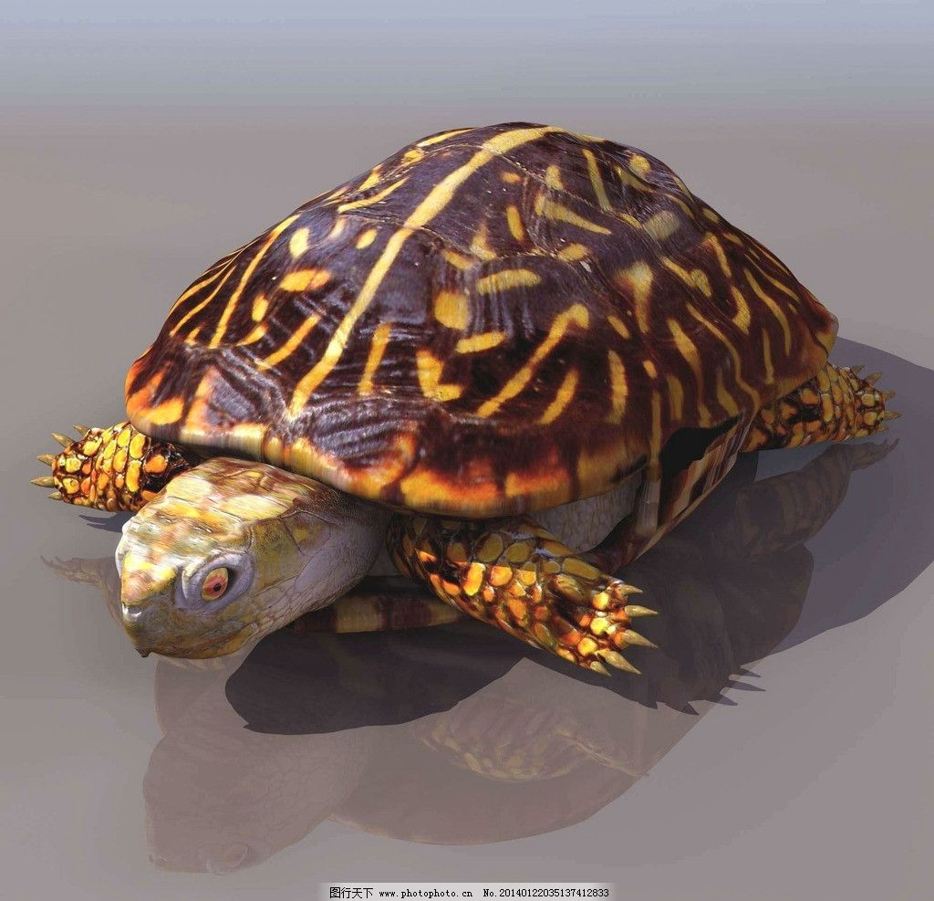 乌龟 野生乌龟 爬行动物 动物世界 野生动物 非人工驯养 海洋生物