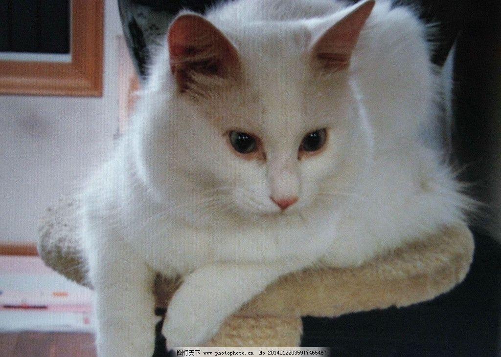 快手白鹤纹身猫