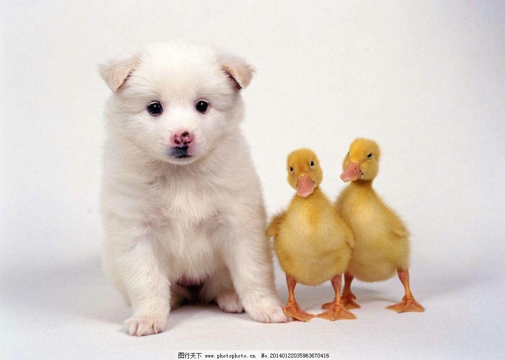 狗 小狗狗 犬 狗宝宝 家畜 小动物 可爱 家禽 宠物狗 摄影