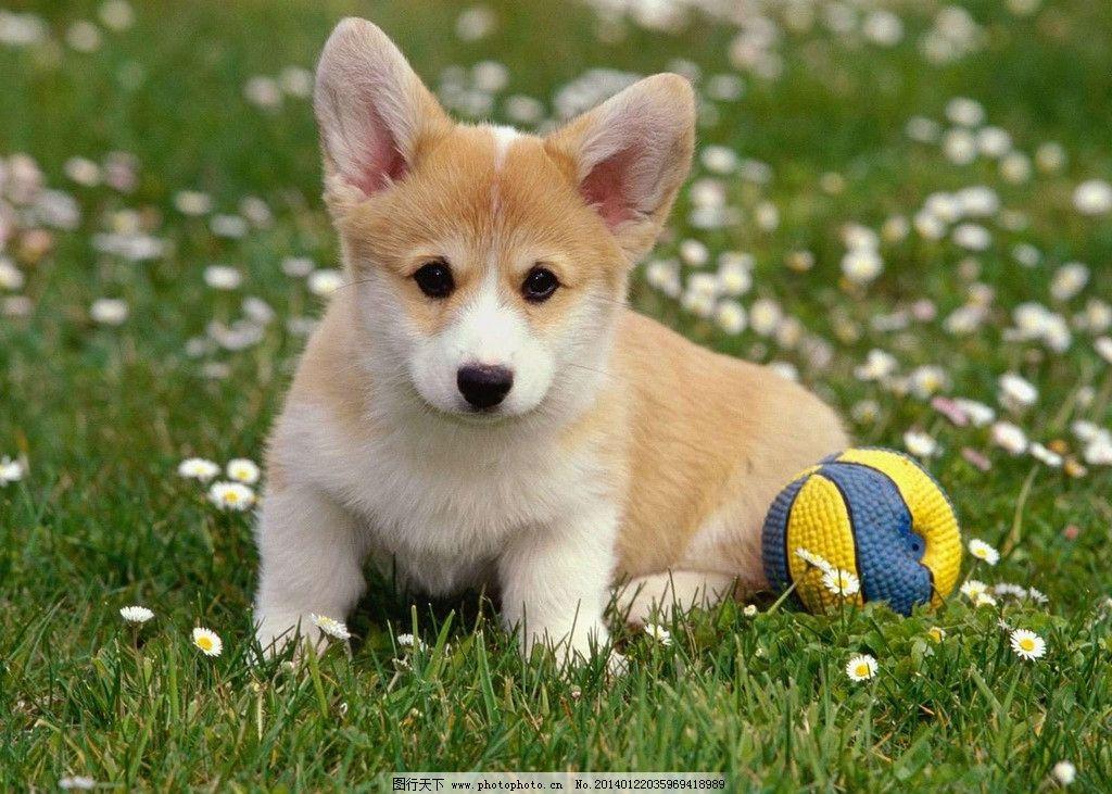 狗 狗宝宝 小狗狗 小动物 可爱 家畜 宠物狗 家禽家畜 生物世界 摄影