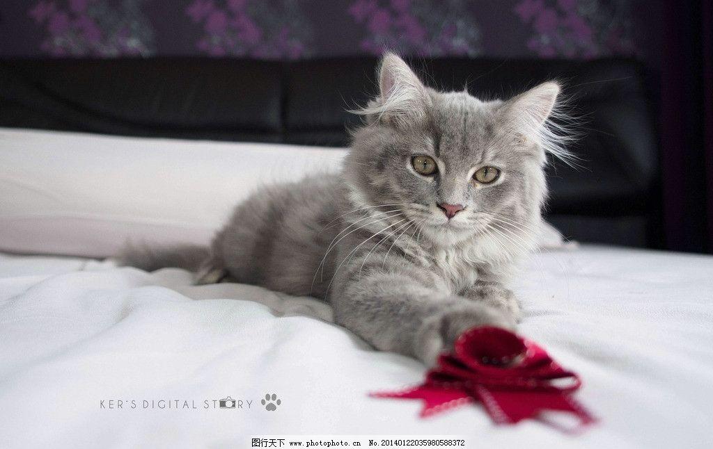 小花猫 猫科动物