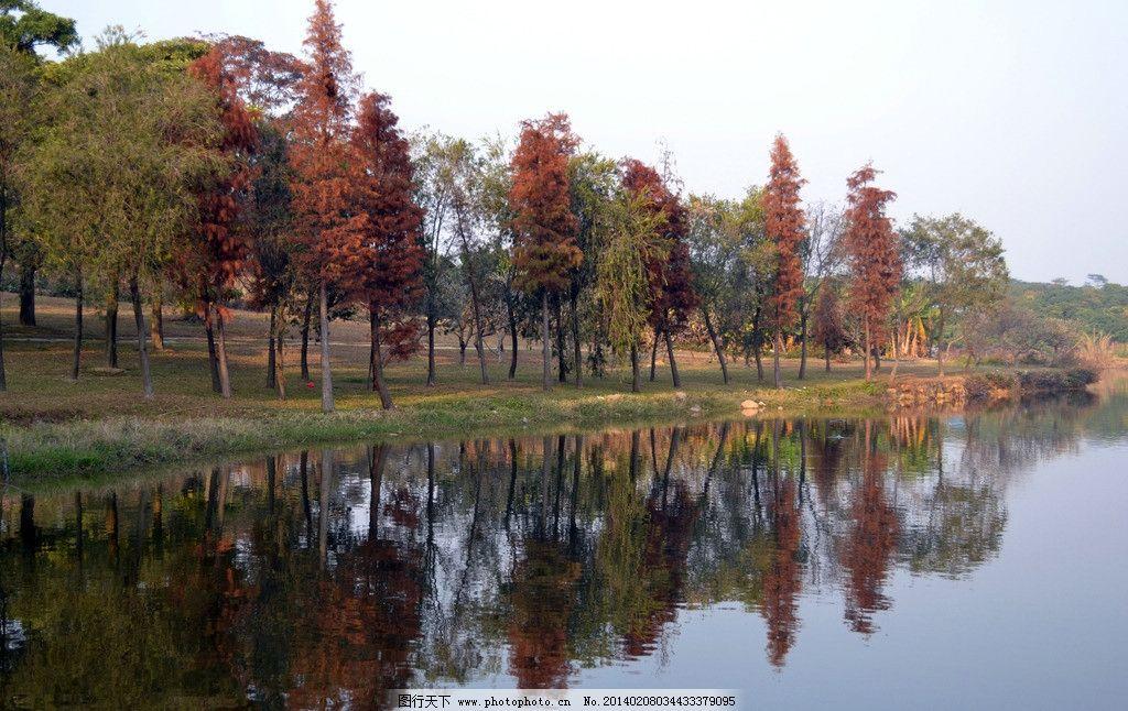 红杉倒影 绿树 倒影 湖畔 柳树 红杉树 山水风景 自然景观 摄影 300