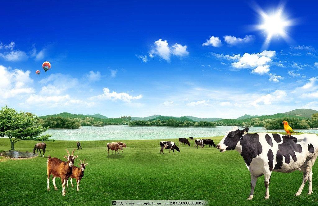 牧场 奶牛 草原 蓝天 蓝天白云 奶牛牧场 羊马 气球 源文件
