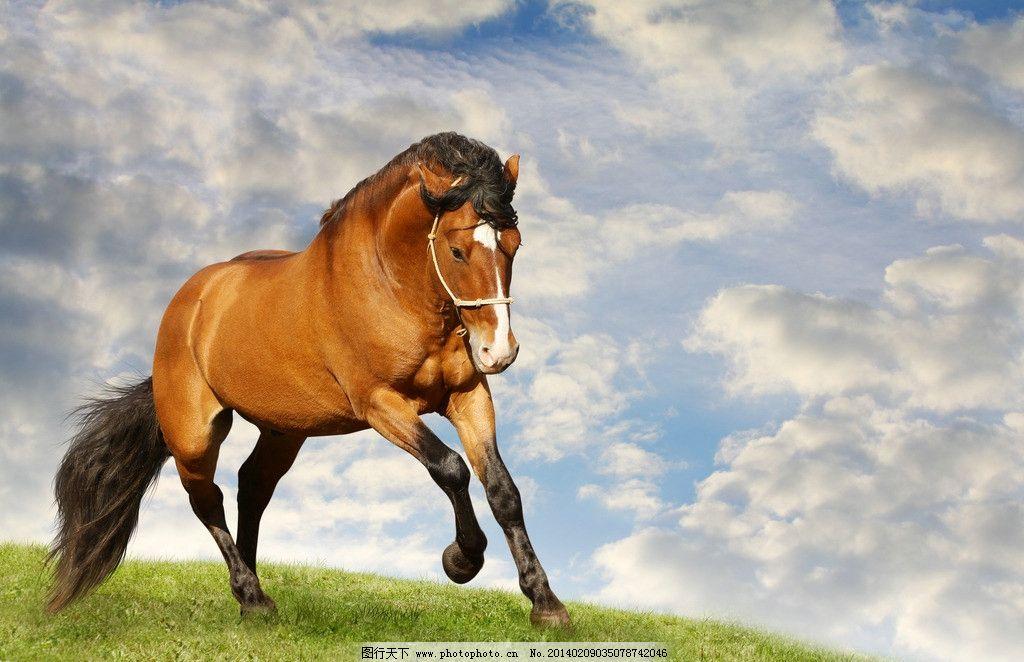 野马图片素材下载 野马 野生动物 生物世界 摄影 马术 2014 年画 草原