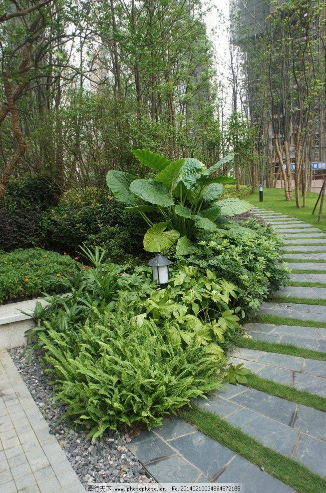 绿化组团植物图片