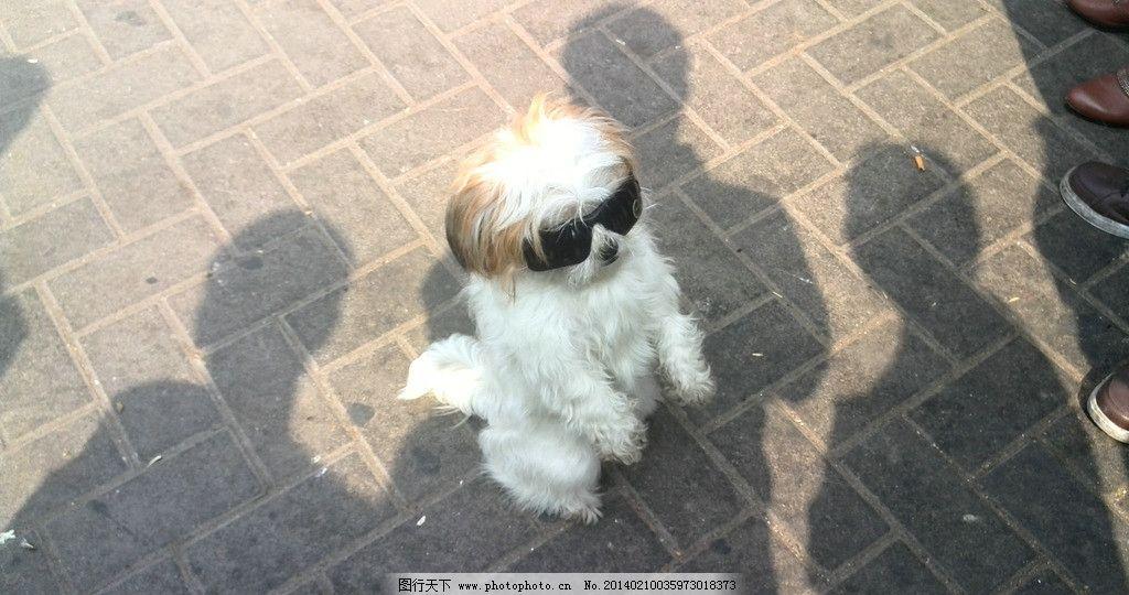 可爱小狗 很酷小狗 小狗 狗 站着的狗 家禽家畜 生物世界 摄影 72dpi