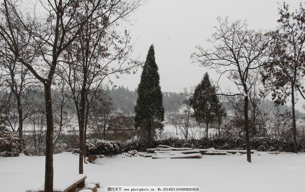 农村雪景 雪地 白雪 枯草 落叶 叶子 枯木风景天空 树枝 冬季 树木 雪