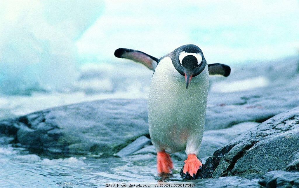 企鹅 可爱 憨厚 北极 寒冷 南极 雪地 冰雪 冰山 蓝天 白云 北极动物