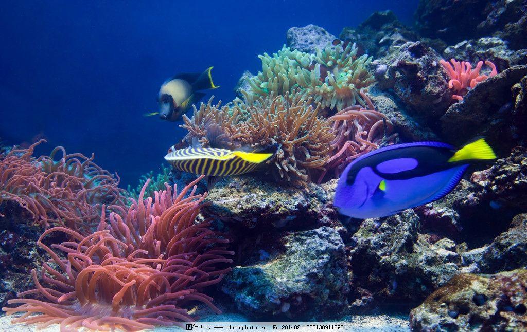 海底世界生物psd