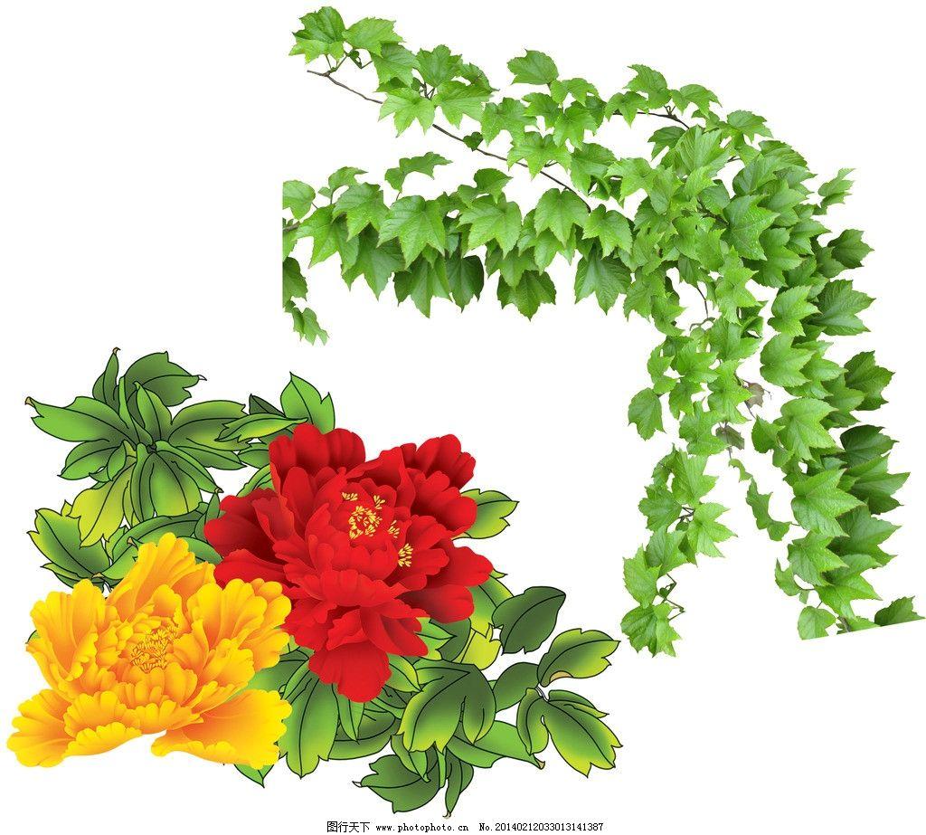 爬山虎 藤蔓 花边 绿叶 绿叶花边 装饰花边 树叶 植物 树藤