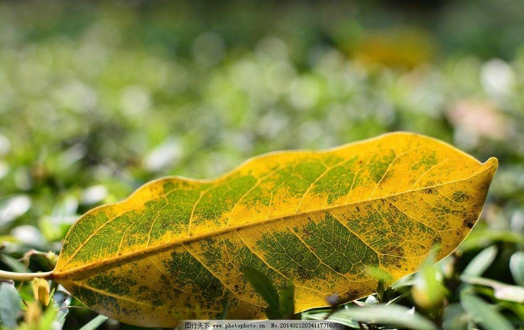 一片秋叶 自然生态 风景 树叶 秋色 树木 黄叶 秋景 自然山水