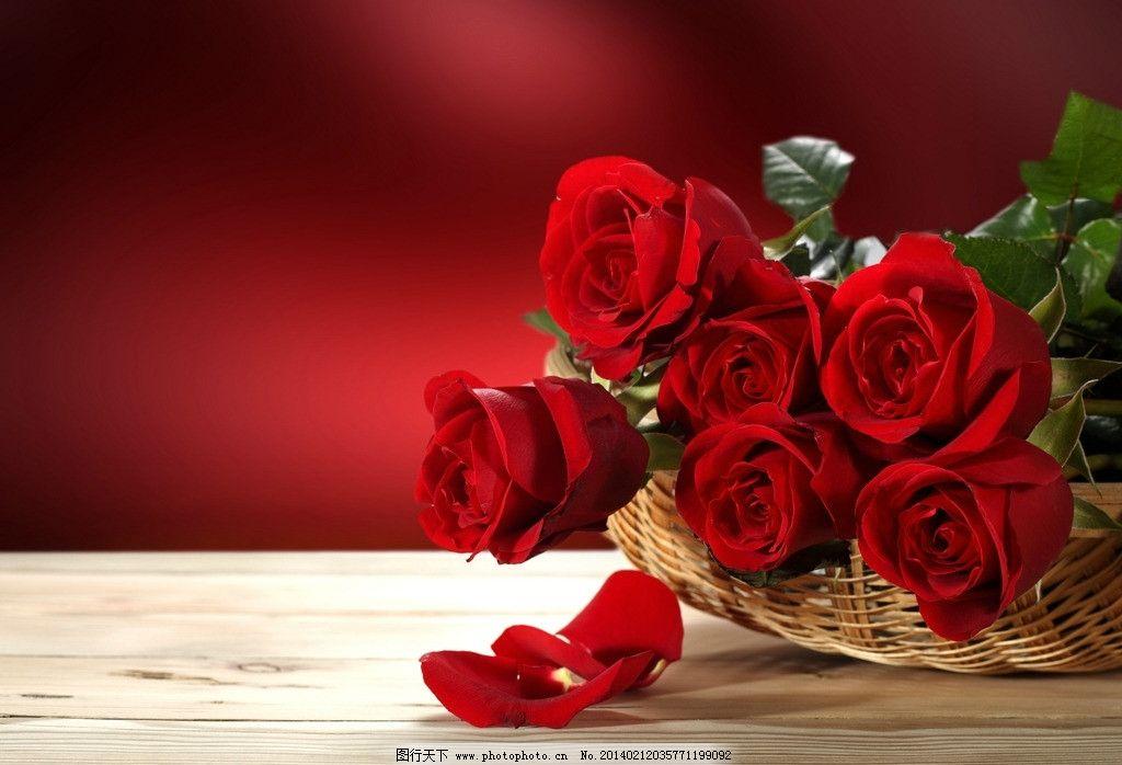 玫瑰 鲜花 花朵 花束 花瓣 娇艳 鲜艳 浪漫 爱情 甜蜜 美丽 节日 花草