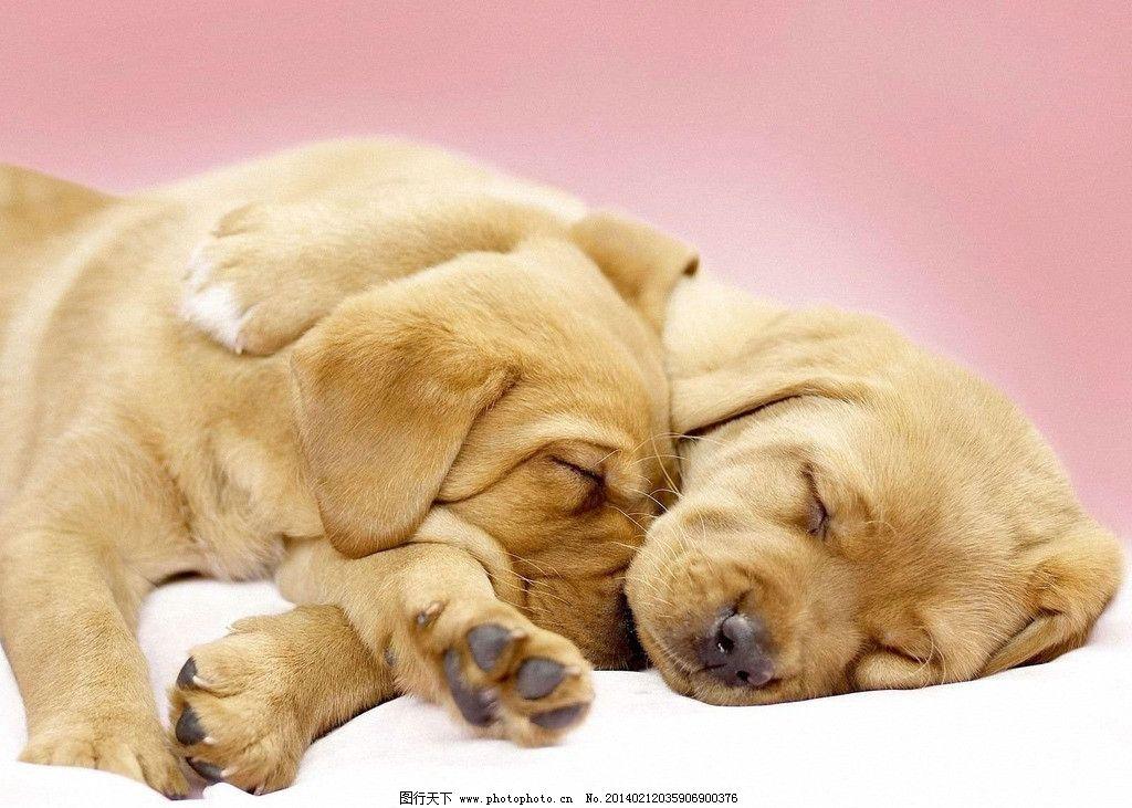 小动物 狗宝宝 可爱 小狗 小狗狗 家禽 宠物狗 dog 家禽家畜 生物世界