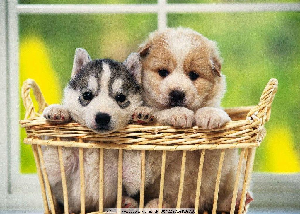 狗 宠物狗 犬 可爱 小动物 家禽 狗狗 dog 家畜 小狗狗 狗宝宝 家禽