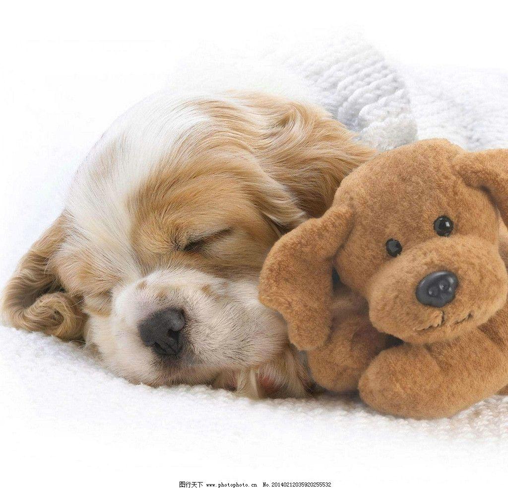狗 可爱 家禽 小动物 狗宝宝 宠物狗 犬 小狗狗 摄影