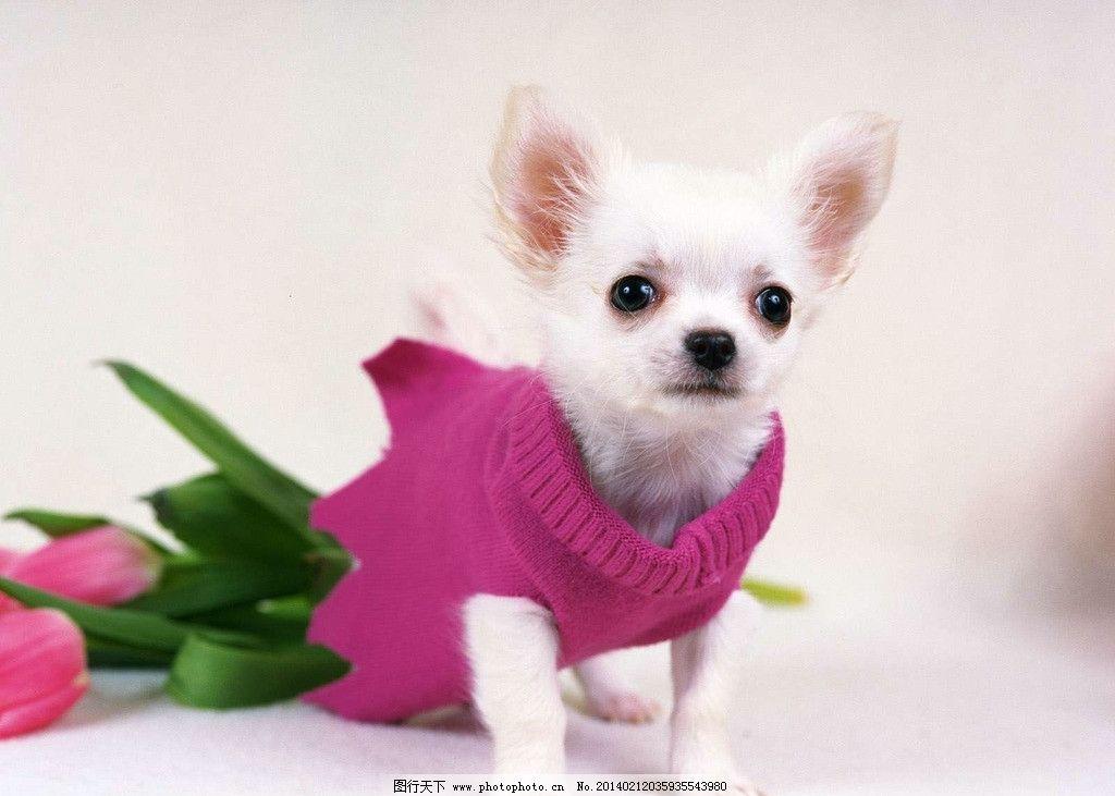 狗 宠物狗 狗宝宝 小动物 dog 家畜 家禽家畜 生物世界 摄影 350dpi