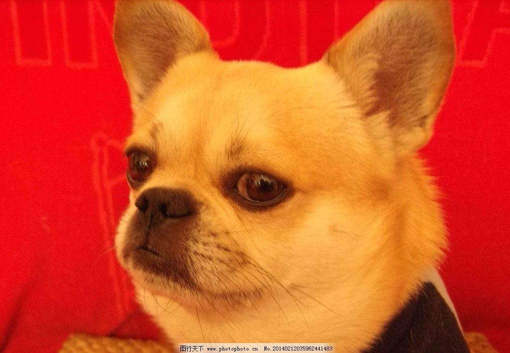 狗 宠物狗 狗宝宝 家禽 小狗狗 可爱 家禽家畜 生物世界 摄影 96dpi
