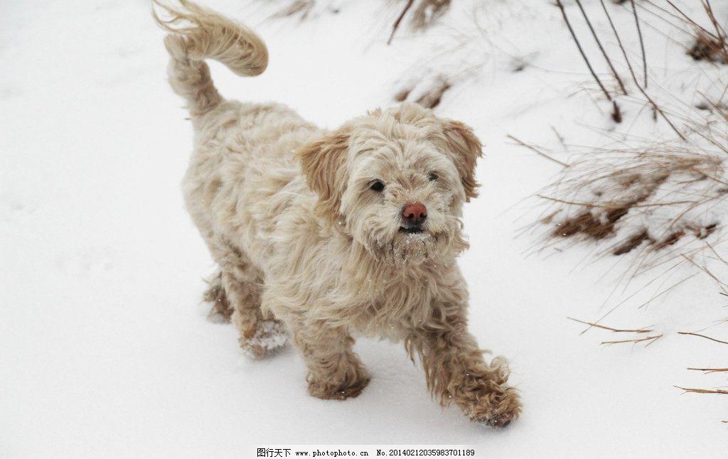 雪中的动物图片
