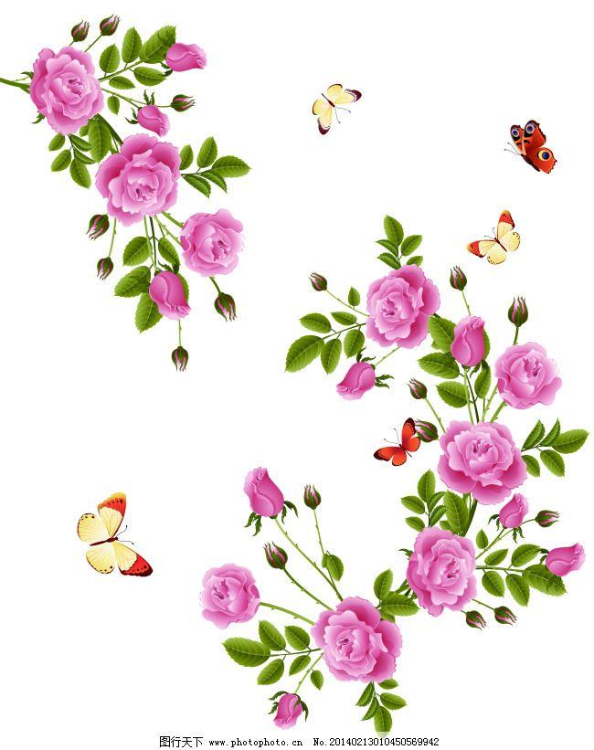 白色背景 粉玫瑰 蝴蝶 花苞 花朵 花枝 绿叶 玫瑰 叶子 k-0641 唯美现