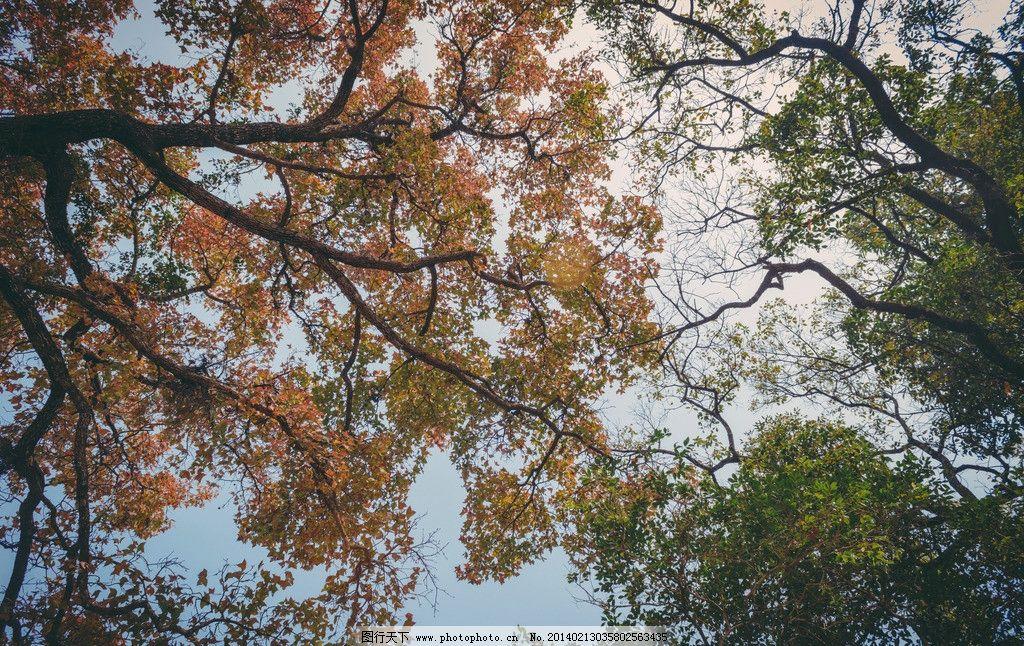 树叶 黄与绿 黄树 绿树 树枝 茂密 茂盛 对比 树木 树木树叶 生物世界