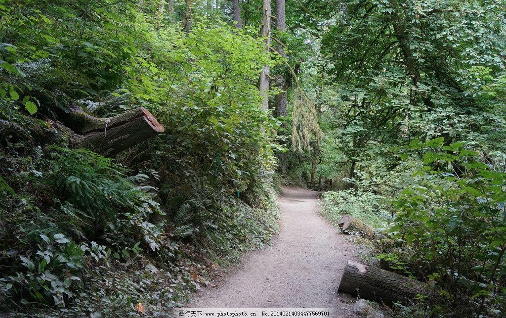 波特兰森林公园 森林 公园 美国 大自然 原始生态 自然风景 山水风景