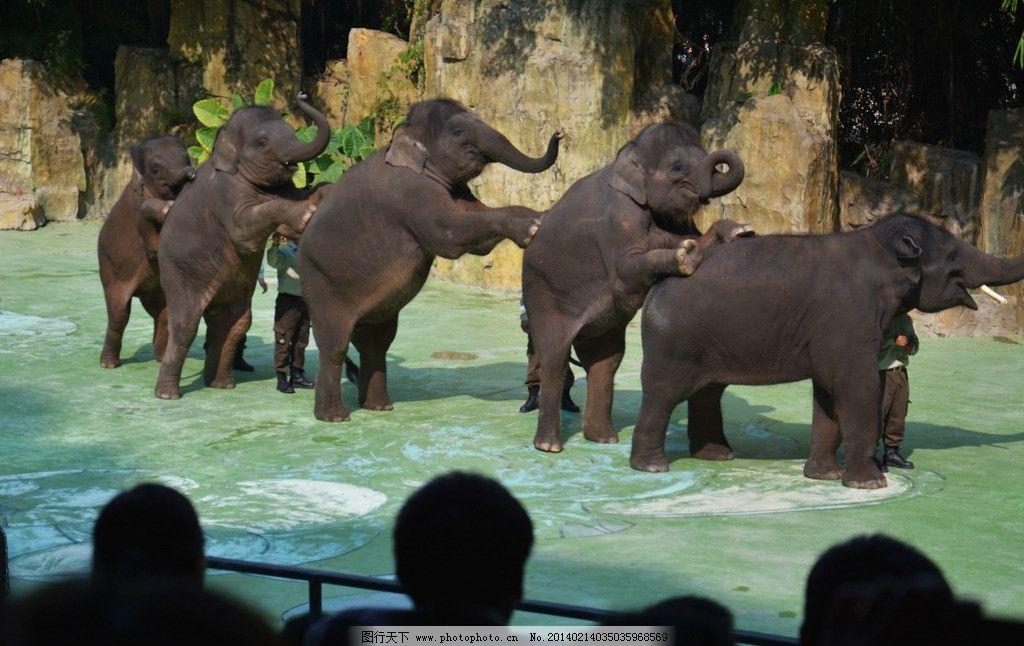 大象 表演 动物 生物 趣味 场景 野生动物 生物世界 摄影 300dpi jpg