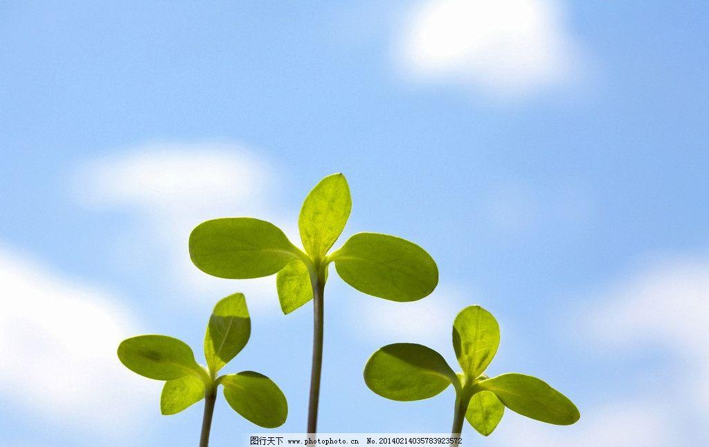 绿叶 发芽 绿色 希望 天空 植物 叶子 花草 生物世界 摄影 300dpi jpg