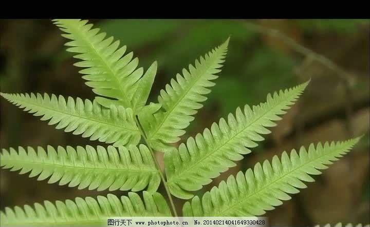 绿叶自然生长视频素材