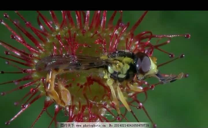 花朵昆虫包容视频素材 自然景色风光视频素材 自然风景视频 花草树木视频