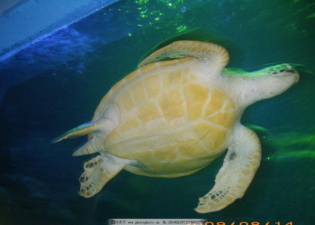 乌龟 动物 风景 旅游 海洋馆 海洋生物 生物世界 摄影 72dpi jpg
