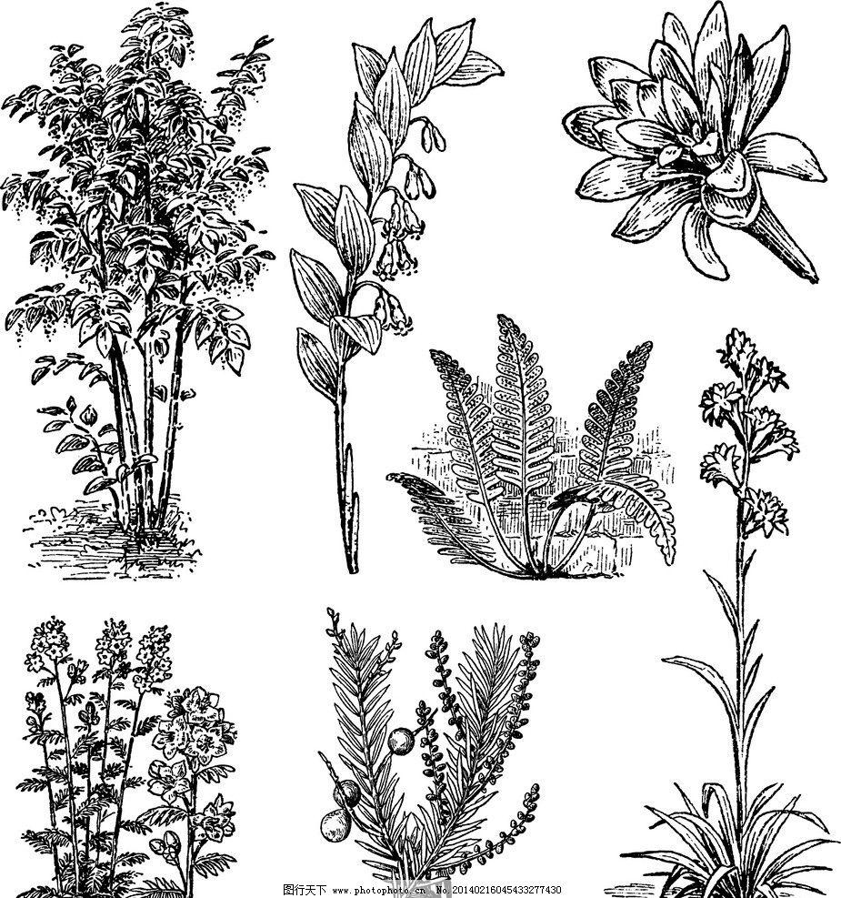 手繪花卉圖片_藝術字體_字體_圖行天下圖庫