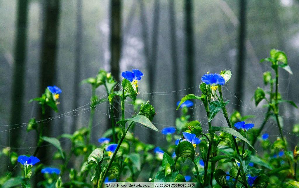 竹林晨花 清晨 露珠 鲜花 蛛网 自然风景 自然景观 摄影