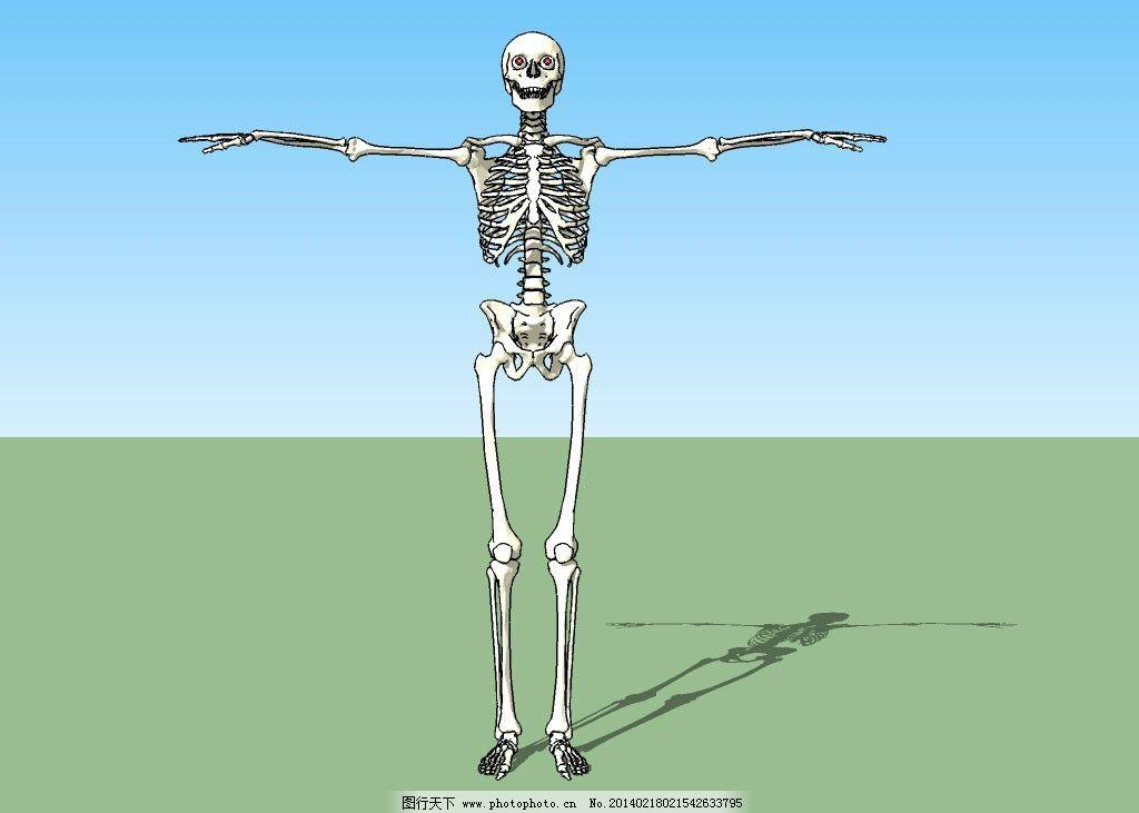 标准骨骼 人体 结构 骨架 三维 立体 造型 经典 其他模型 源文件
