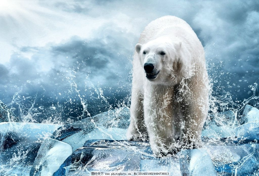 北极熊图片