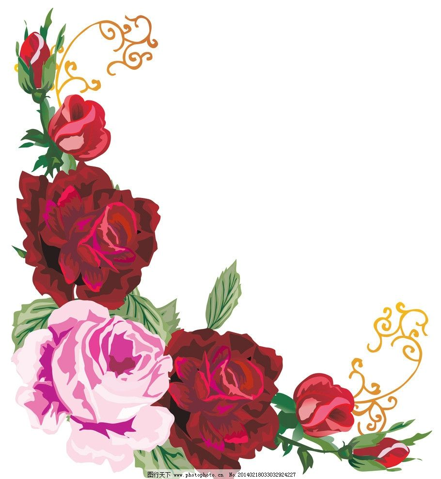 玫瑰 玫瑰花 手绘玫瑰 玫瑰花纹 边框 边角框 红色玫瑰 精美花纹
