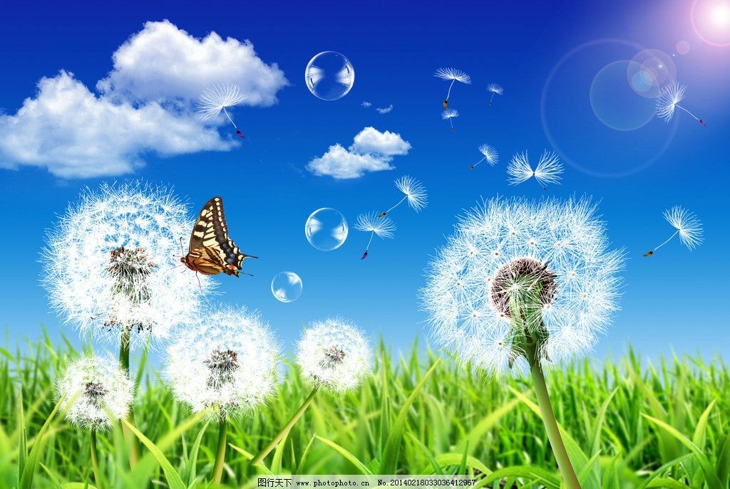 蒲公英 蒲公英素材下载 蒲公英模板下载 唯美 放飞梦想 阳光 白云图片
