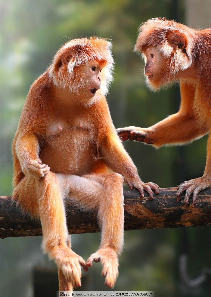 猴子 小猴子 小动物 野生动物 可爱 保护动物 生物世界 摄影