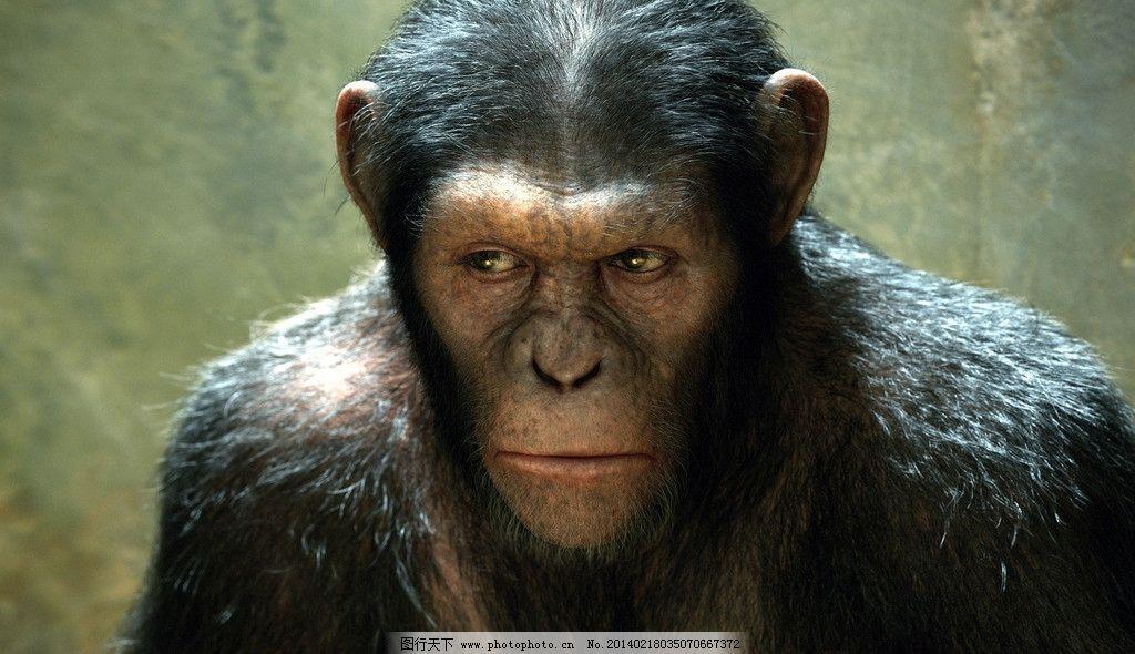 猩猩 大猩猩 猿 猿人 猿猴 猴子 动物 高智商动物 野人 野生动物