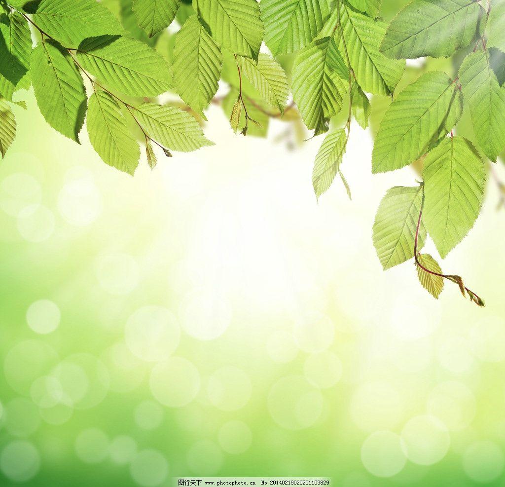 背景 壁纸 绿色 绿叶 树叶 植物 桌面 1024_987