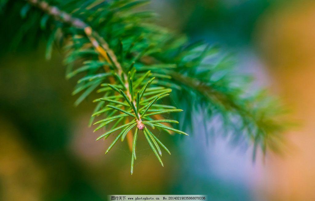 设计图库 生物世界 树木树叶    上传: 2014-2-19 大小: 2.
