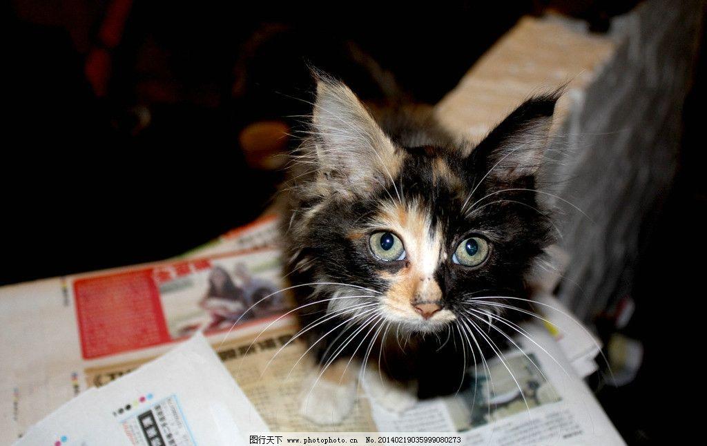 瞪眼猫 快乐 小丑猫 可爱动物 瞪眼 大眼睛 家禽家畜 生物世界 摄影