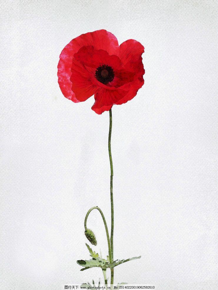 漂亮手绘花朵高清图片