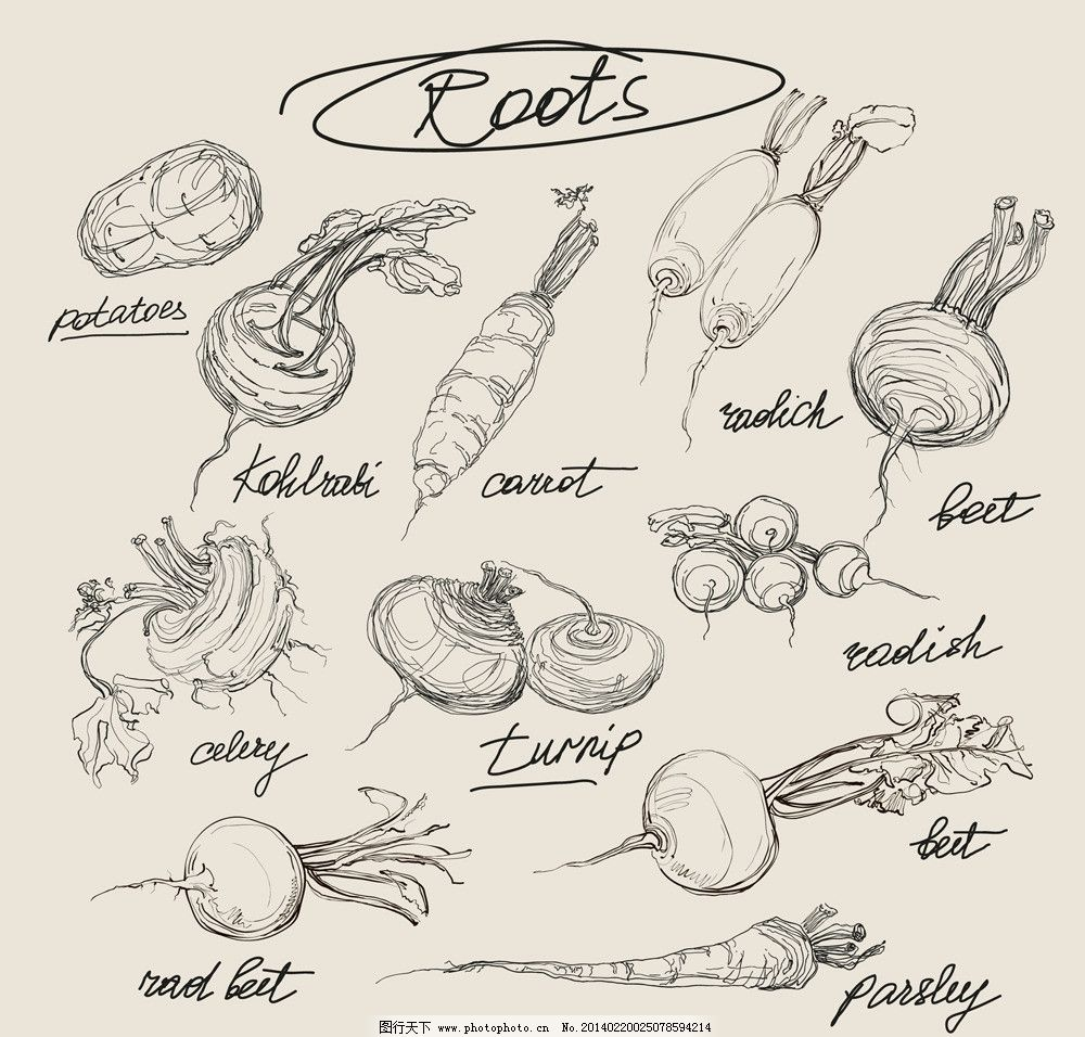 蔬菜创意设计素描图片