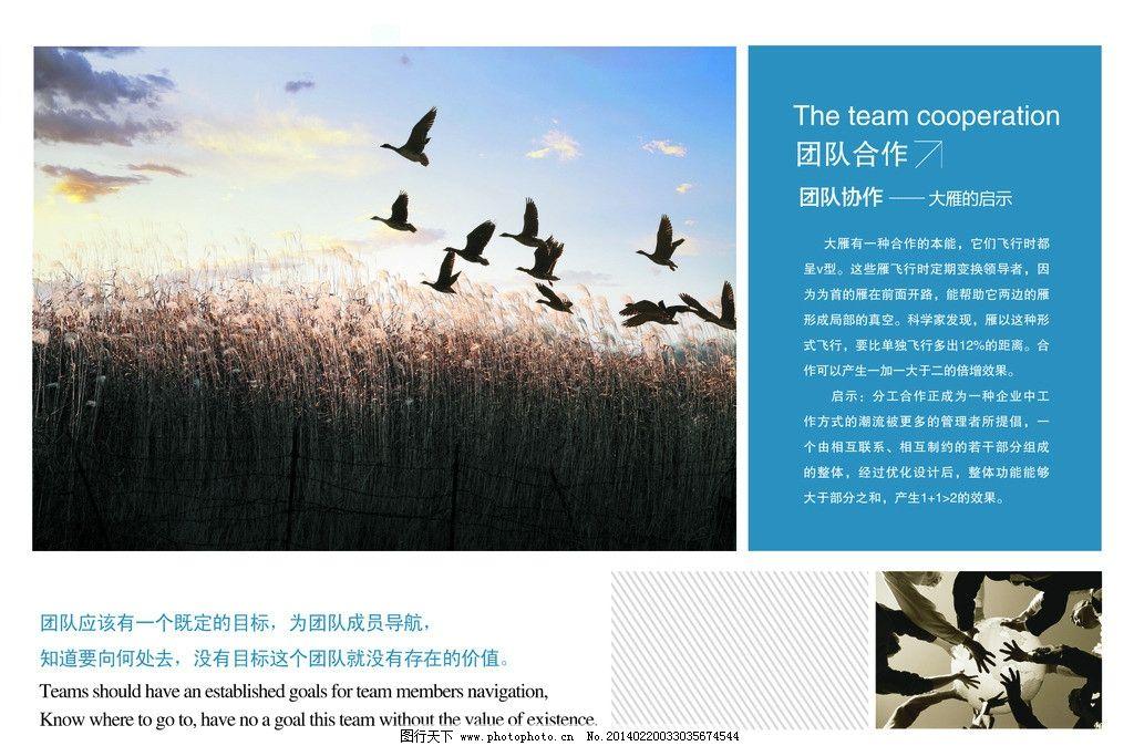 团队合作 大雁南飞 团队协作 合作的重要性 大雁启示 团队的力量 psd图片