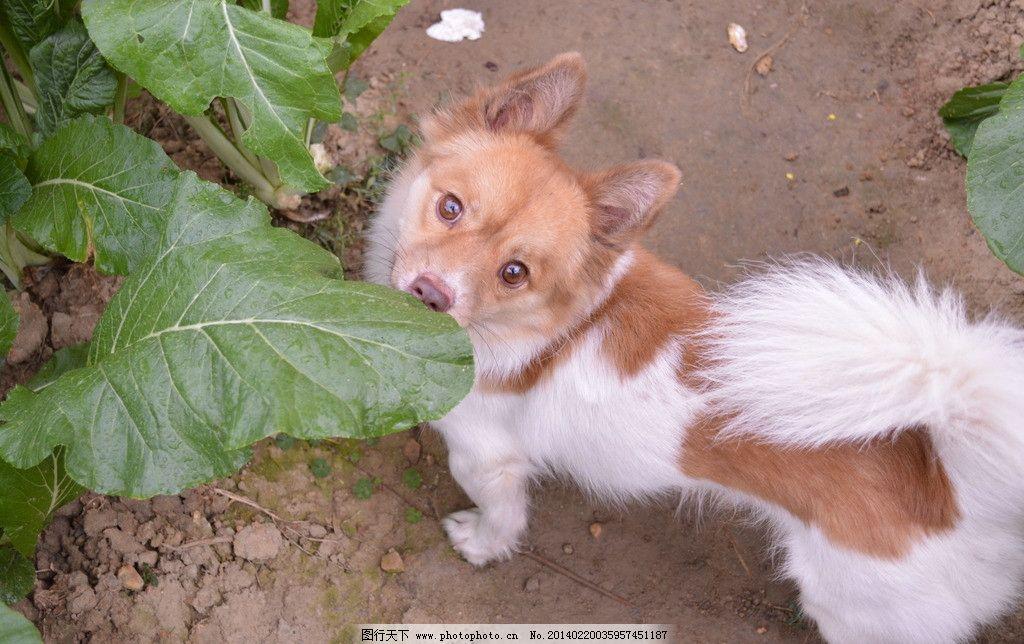 狗狗 狗 宠物 宠物狗 可爱的宠物 可爱 可爱的狗 家禽家畜 生物世界