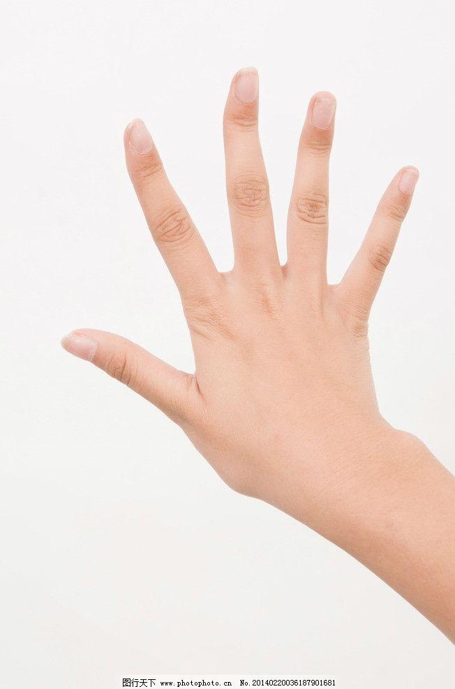 手掌皮肤结构图