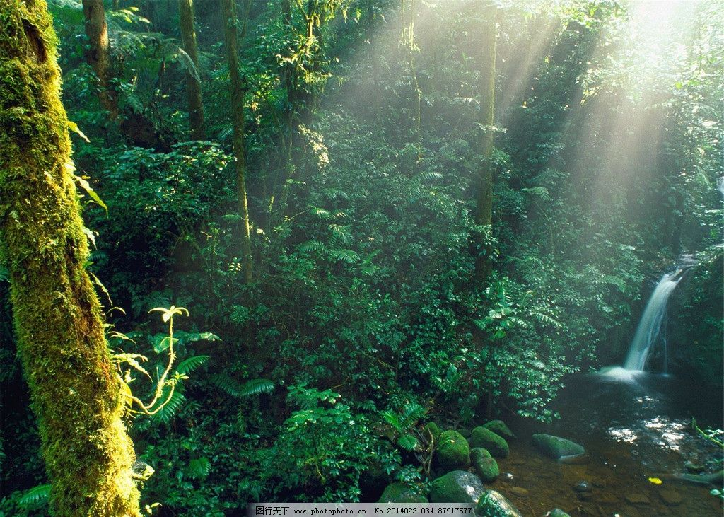 原始森林绘画图片大全展示