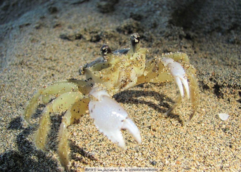 光与蟹 光 蟹 背景图 海洋 动物 海洋生物 生物世界 摄影 180dpi jpg
