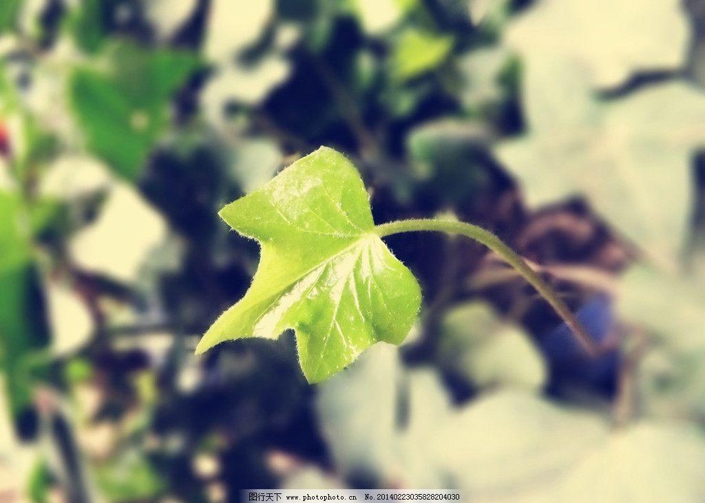 绿芽 绿芽图片素材下载 嫩芽 绿叶 绿色 树枝 唯美 生物世界 树木树叶